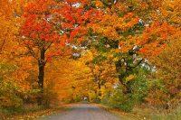Caida de hojas en otoño